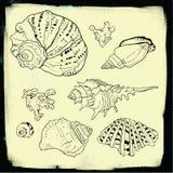 Sistema de conchas marinas dibujadas mano del vector Imagen de archivo