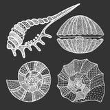 Sistema de conchas marinas y de estrellas de mar Imagen de archivo libre de regalías