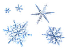 Sistema de copos de nieve naturales aislados en un fondo blanco Imagen de archivo libre de regalías
