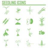 Sistema de cuatro iconos de la planta o de la hoja Ilustración del vector Stock de ilustración