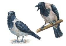 Sistema de cuervos con diversas emociones Pájaro enojado, gritador y calma, pájaros reservados stock de ilustración