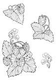 Sistema de dibujos de esquema de fresas Imagen de archivo