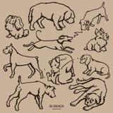 Sistema de diez perros dibujados mano Imagen de archivo libre de regalías