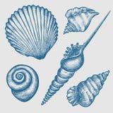 Sistema de diversas conchas marinas Foto de archivo libre de regalías
