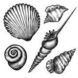 Sistema de diversas conchas marinas Imágenes de archivo libres de regalías