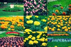Sistema de diversas flores del macizo de flores de la primavera, Fotos de archivo
