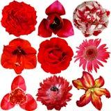 Sistema de diversas flores rojas Imagen de archivo