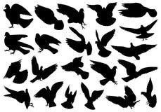 Sistema de diversas palomas Fotos de archivo libres de regalías