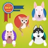 Sistema de diversas razas del perro Imágenes de archivo libres de regalías