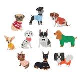 Sistema de diversas razas de perros en ropa y accesorios Fotos de archivo libres de regalías