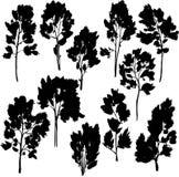 Sistema de diversos árboles con las hojas Imágenes de archivo libres de regalías