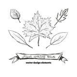 Sistema de diversos tipos de hojas de otoño dibujadas mano Ilustración del vector Foto de archivo libre de regalías