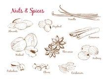 Sistema de ejemplos con las especias y las nueces libre illustration