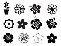 Sistema de ejemplos de la flor Imágenes de archivo libres de regalías