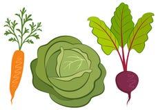 Sistema de ejemplos dibujados mano de las verduras Fotos de archivo
