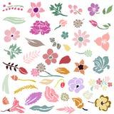 Sistema de elementos del diseño floral Fotografía de archivo libre de regalías