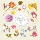 Sistema de elementos del diseño floral de la acuarela peonies libre illustration