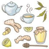 Sistema de elementos dibujados mano del té del jengibre Foto de archivo