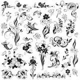 Sistema de elementos florales del vector Fotografía de archivo