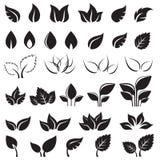 Sistema de elementos negros del diseño de las hojas aislados Foto de archivo