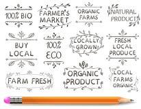 Sistema de elementos tipográficos del VECTOR Los granjeros comercializan, cultivan la comida fresca del eco Sistema a mano en el  ilustración del vector