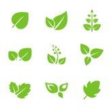 Sistema de elementos verdes del diseño de las hojas Foto de archivo libre de regalías
