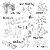 Sistema de especias en el bosquejo Anís, cardamomo, canela, pimienta inglesa Foto de archivo libre de regalías