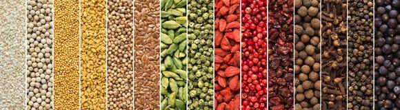 Sistema de especias y de hierbas para la cocina india fondo colorido del condimento para el acondicionamiento de los alimentos de fotografía de archivo