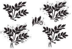 Sistema de espiguillas de la flor Foto de archivo libre de regalías