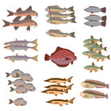 Sistema de estilo plano de diversos pescados Fotos de archivo libres de regalías