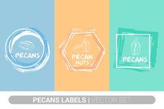 Sistema de etiqueta colorido de las nueces de pacana Formas org?nicas crudas de la insignia de las pacanas Etiquetas creativas de ilustración del vector