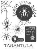 Sistema de etiquetas de la araña del vintage, de insignias y de elementos del diseño Vector Imagenes de archivo