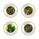 Sistema de etiquetas de los aceites esenciales Eucalipto, ciprés, árbol de alcanfor, enebro Foto de archivo libre de regalías