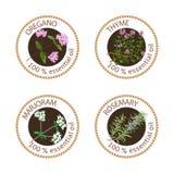 Sistema de etiquetas de los aceites esenciales Orégano, tomillo, mejorana, romero libre illustration