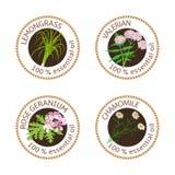 Sistema de etiquetas de los aceites esenciales Rose Geranium, Cymbopogon, manzanilla, hierba de la valeriana Imagen de archivo libre de regalías