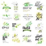 Sistema de etiquetas dibujadas mano de la acuarela y elementos del aceite de oliva stock de ilustración