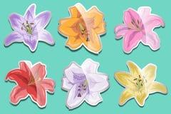 Sistema de etiquetas engomadas brillantes de los lirios para su diseño Imágenes de archivo libres de regalías