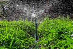 Sistema de extinção de incêndios que molha as plantas, Tailândia tropical Fotos de Stock