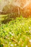 Sistema de extinção de incêndios automático do gramado do jardim na grama molhando da ação foto de stock