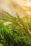 Sistema de extinção de incêndios automático do gramado do jardim na grama molhando da ação imagens de stock royalty free