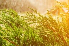 Sistema de extinção de incêndios automático do gramado do jardim na grama molhando da ação imagem de stock