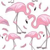 Sistema de flamencos rosados con los picos negros con las plumas rosadas alrededor de ellas Modelo inconsútil Ilustración del vec Fotografía de archivo