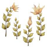 Sistema de flores anaranjadas Fotos de archivo