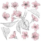 Sistema de flores de cerezo Colección de flores de Sakura Apenas llovido encendido libre illustration