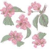 Sistema de flores de cerezo Colección de flores de Sakura Apenas llovido encendido stock de ilustración