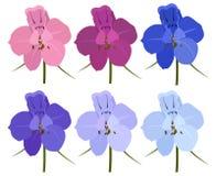 Sistema de 6 flores coloreadas Flores del delfinio Imagenes de archivo