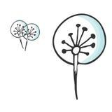 Sistema de flores del diente de león del dandeloon Ejemplo botánico dibujado mano Imagen de archivo libre de regalías