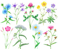 Sistema de flores del prado Fotos de archivo libres de regalías