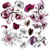 Sistema de flores dibujadas mano del vector Fotos de archivo libres de regalías