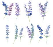 Sistema de flores de la lavanda de la acuarela Imagenes de archivo